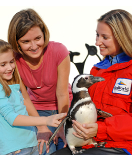 sea world behind the scenes essay Ever wondered what goes on behind the scenes at deep sea world what we feed our sharks where our water comes from what our aquarists do well here's your chance.