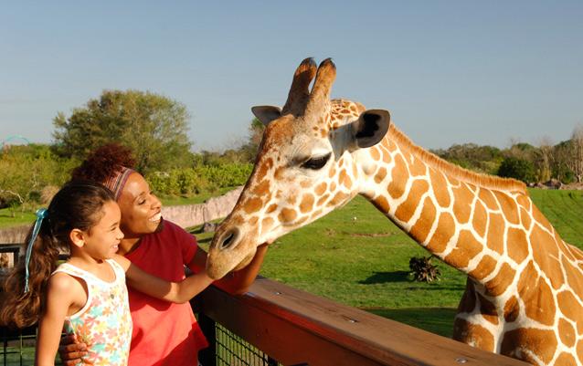 Serengeti Safari Busch Gardens Tampa