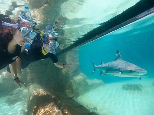 Discovery Cove 4