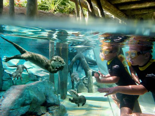 SeaWorld's Discovery Cove