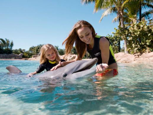 Discovery Cove 5